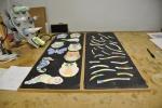 alle werkstukken  klaar voor in de oven, Uniek kinderfeestje, Glasatelier Vetro Colorato.jpg